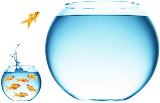 Swimming Our Blue Ocean To Help You Find Your Blue Ocean Strategy