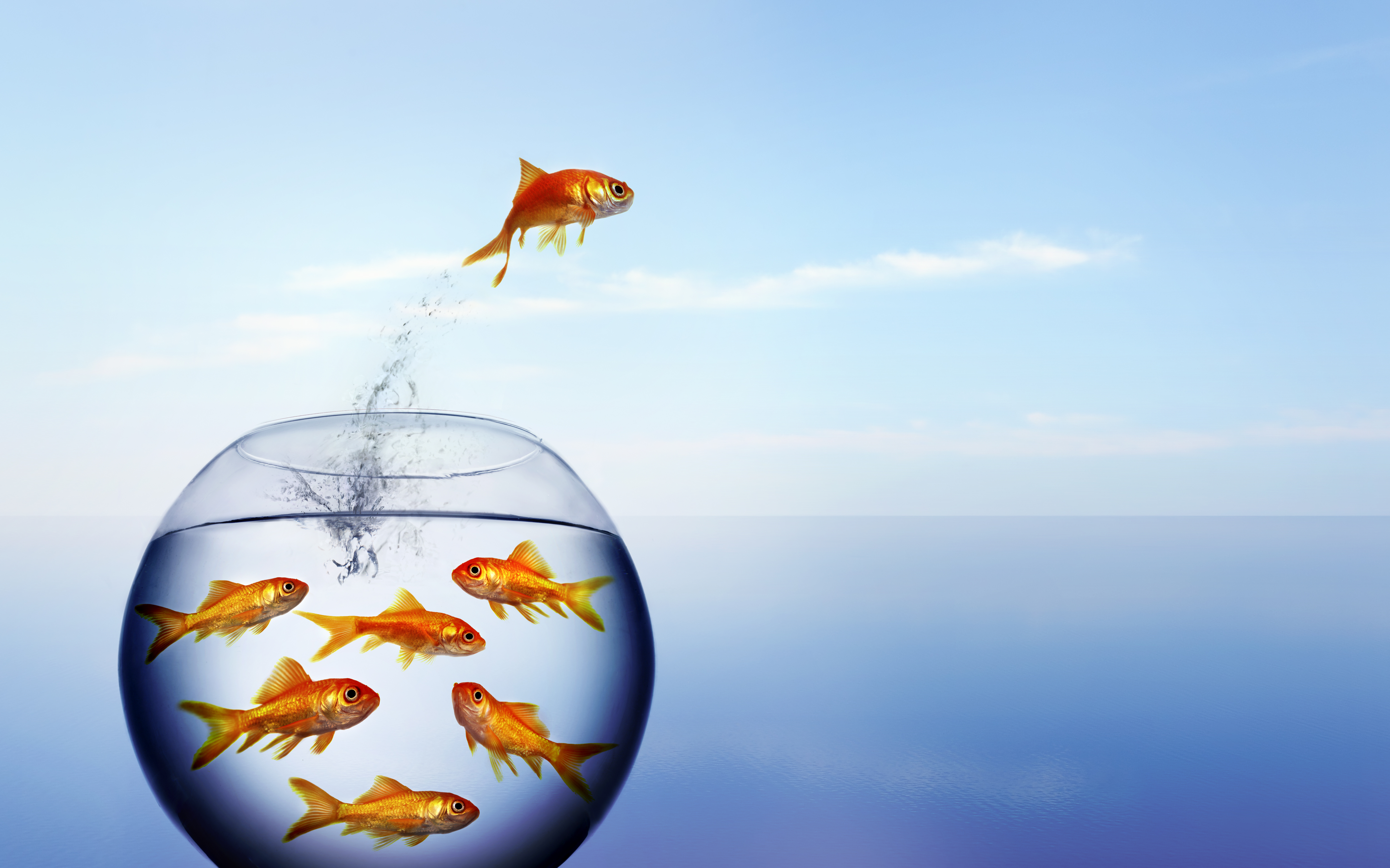 How To Find Your Blue Ocean Strategy®: Step 1