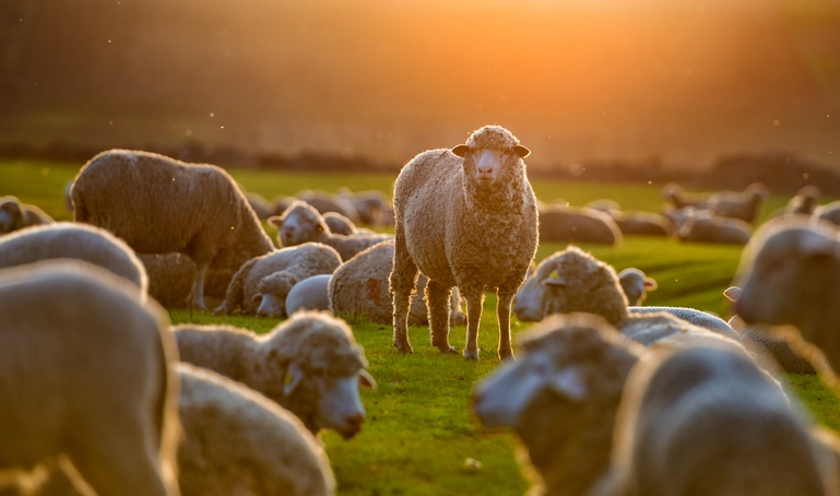 How Corporate Anthropology Can Leave You Questioning Your Herd